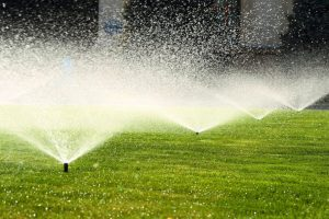 best-time-to-water-your-lawn