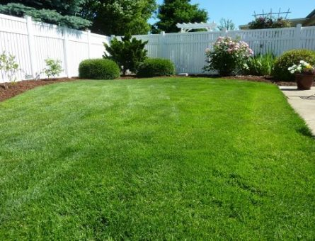 Why Organic is the Best Choice When Picking Out Fertilizer for Your Lawn