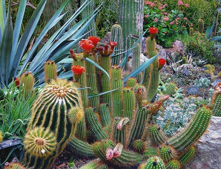 Get Off the Grass How to Build a Beautiful Backyard in the Desert