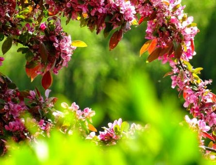 diffrent flowers