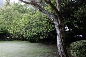 4 Reasons A Sick Tree Can Be A Liability For Your Home
